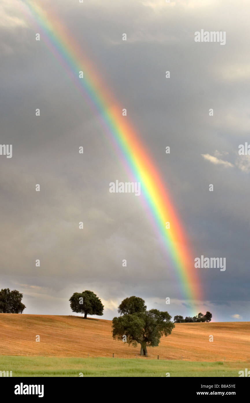 pretty rainbow in a field with trees - Stock Image