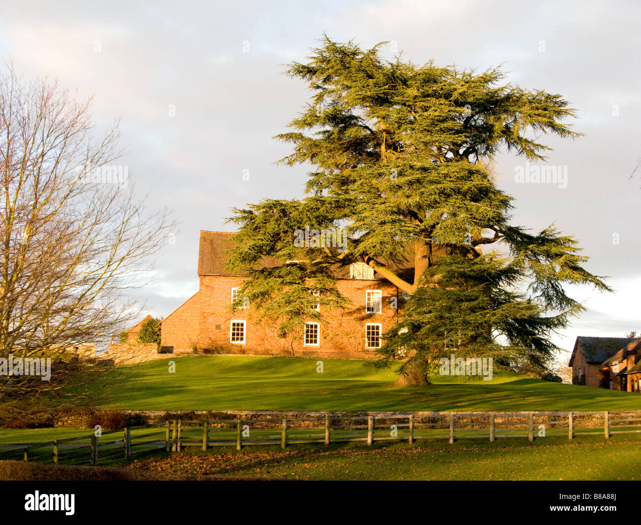Cedar of Lebanon, an ornamental conifer, in front of house - Stock Image