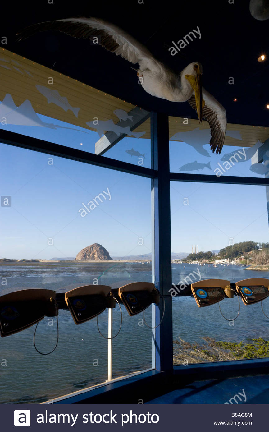 Morro Bay Museum of Natural History Scenic View and Pelican Model Morro Bay State Park California - Stock Image