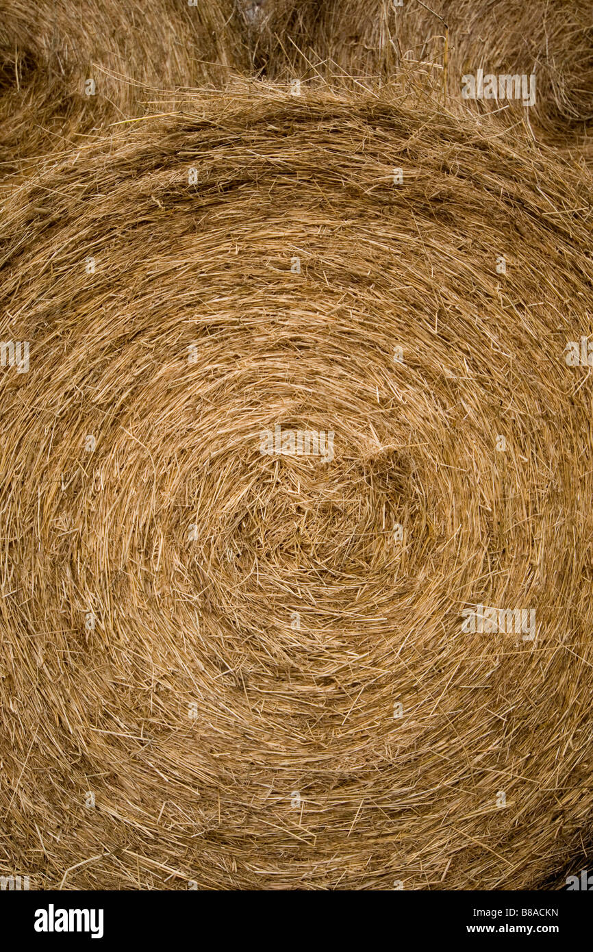 Close up of big bales on Farm in Weardale Co . Durham - Stock Image