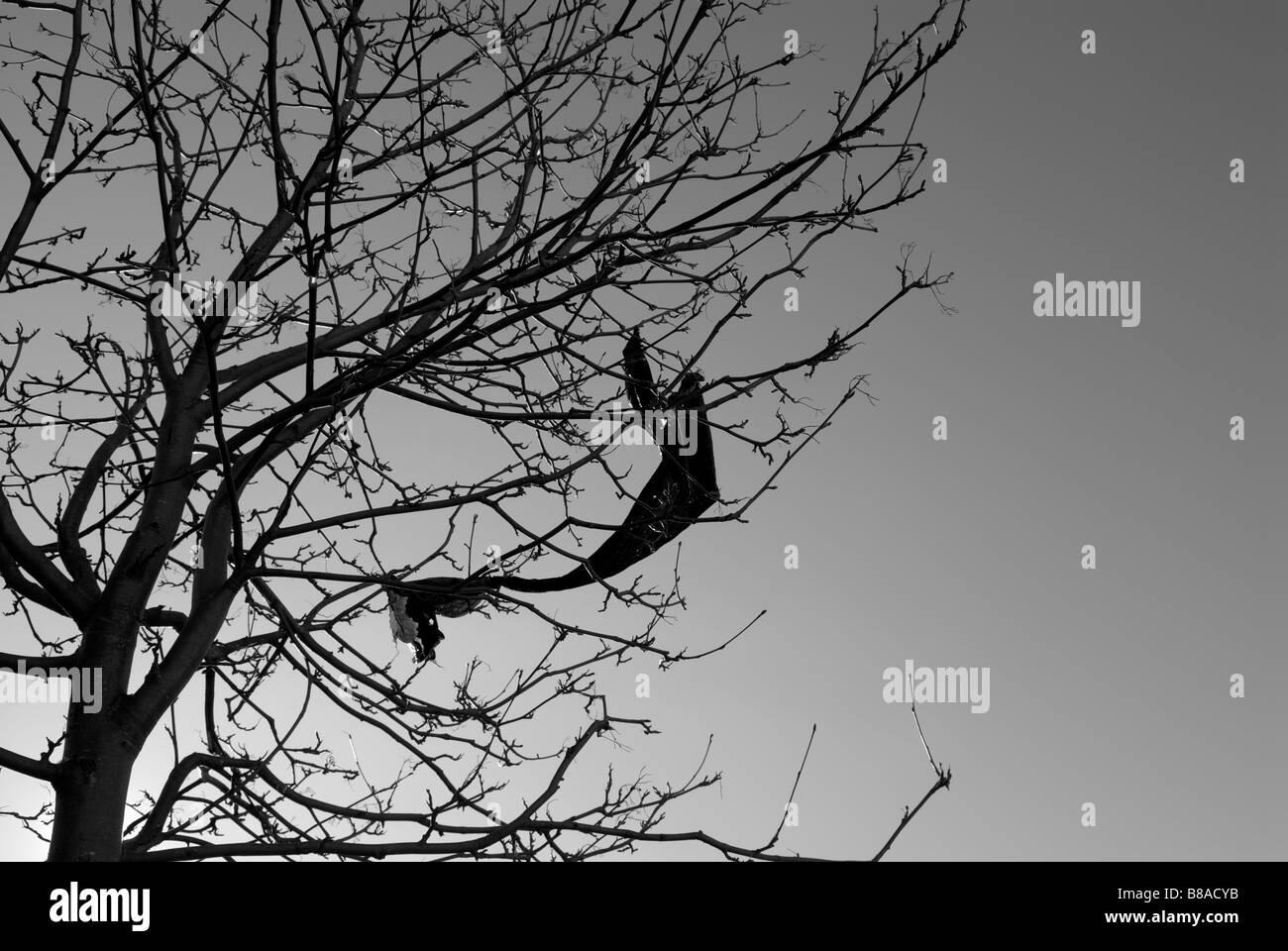 PLASTIC LITTER CAUGHT IN TREE - Stock Image