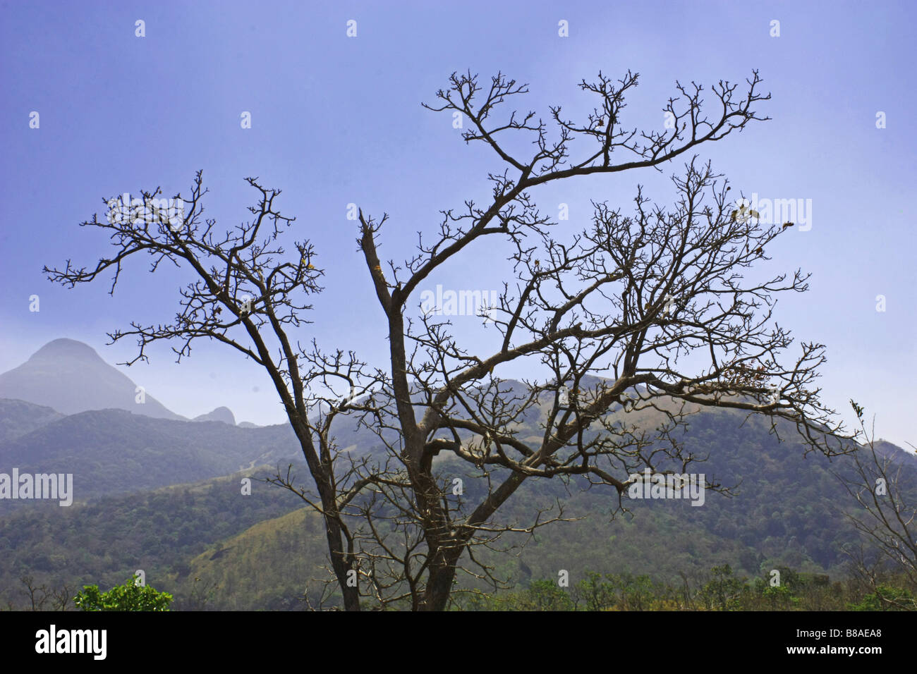 Landscape of a withered tree on a mountaineous background - Stock Image