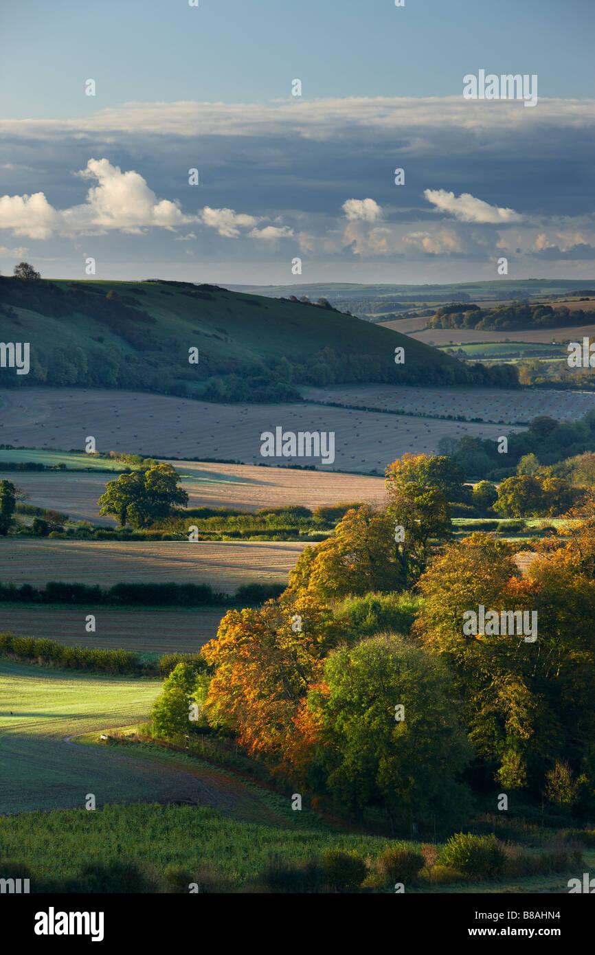 an autumn dawn nr Minterne Magna, Dorset, England, UK Stock Photo