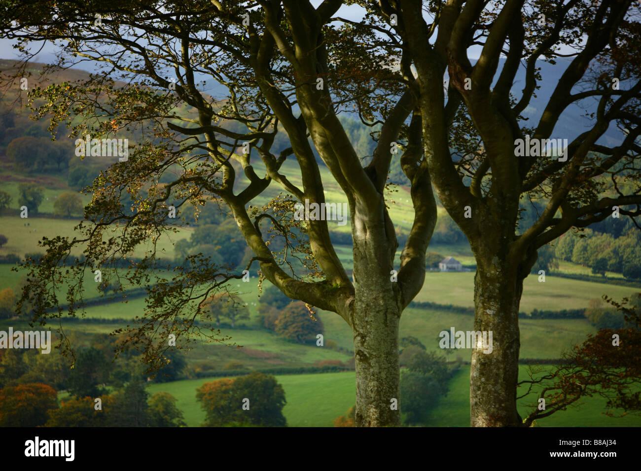 autumn colours near Capel Garmon, Snowdonia National Park, North Wales - Stock Image