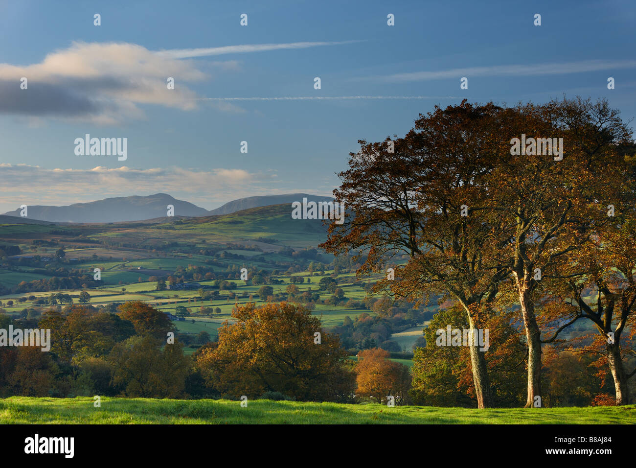 rolling farmland on the edge of Snowdonia National Park, nr Ysbyty Ifan, County Conway, North Wales - Stock Image