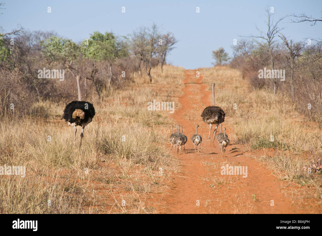 Waterburg Wilderness, Lodge,Namibia, South West Africa - Stock Image