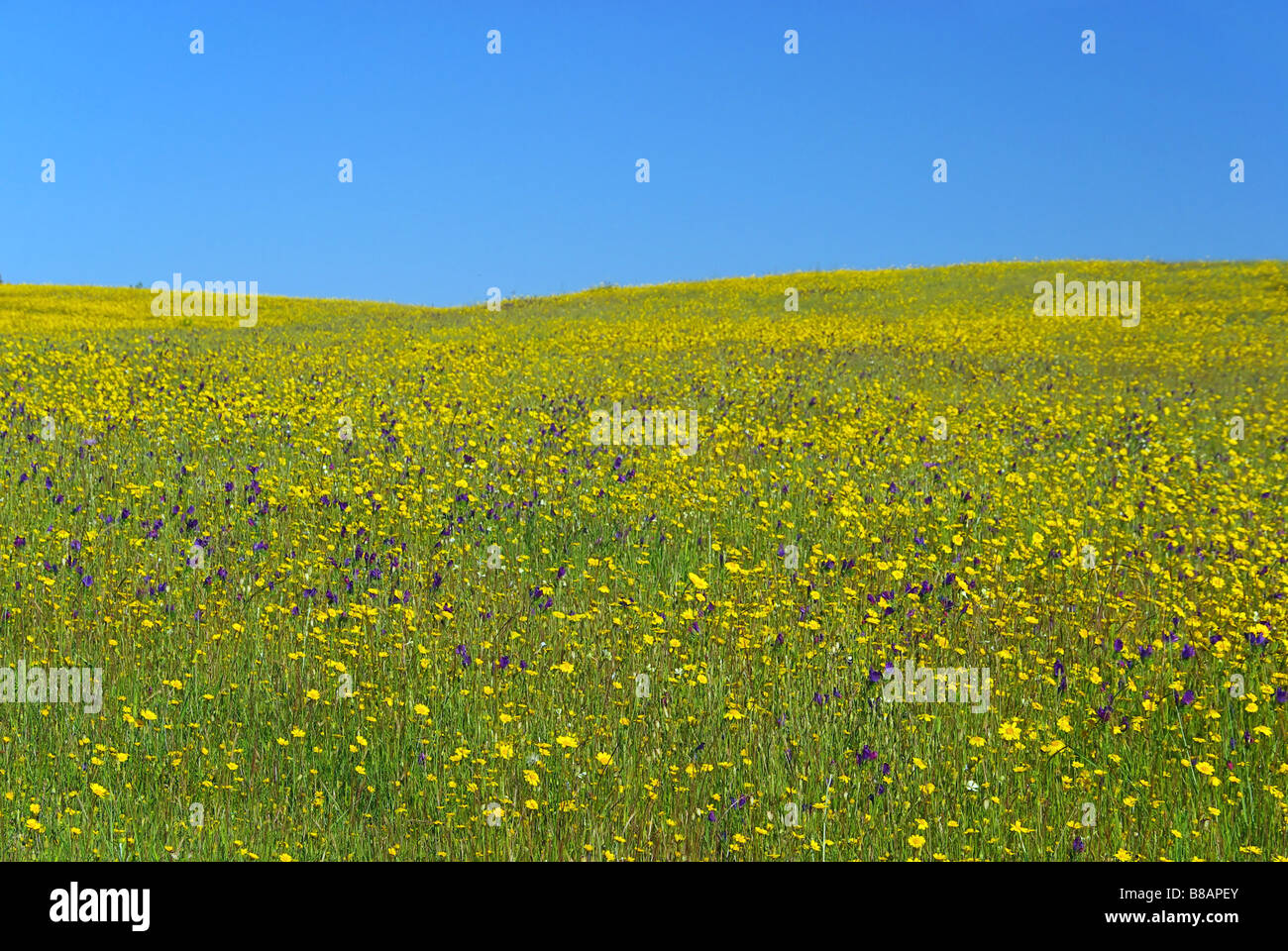 Wiese meadow 22 - Stock Image