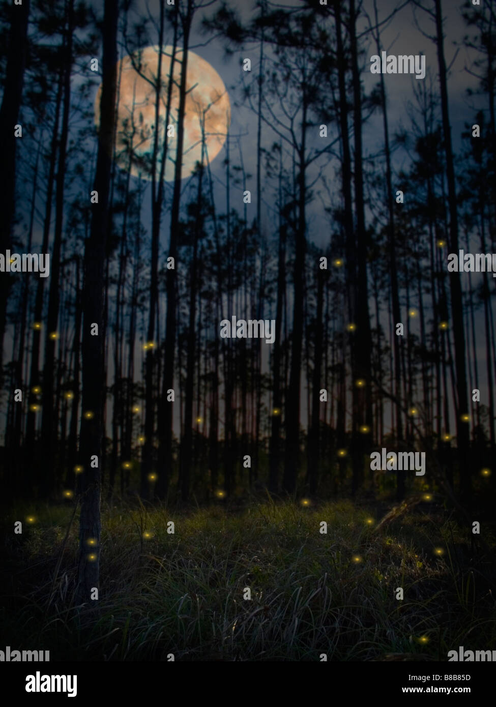 Group of fireflies in a forest - Stock Image