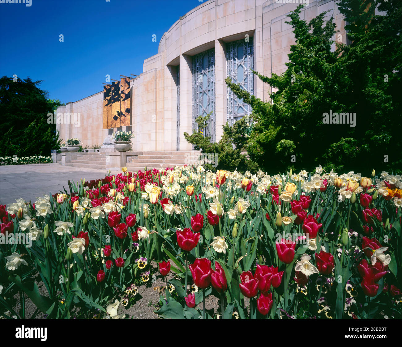 WASHINGTON - Tulips blooming at the Asian Art Museum in Volunteer Park on Capital Hill in Seattle. - Stock Image