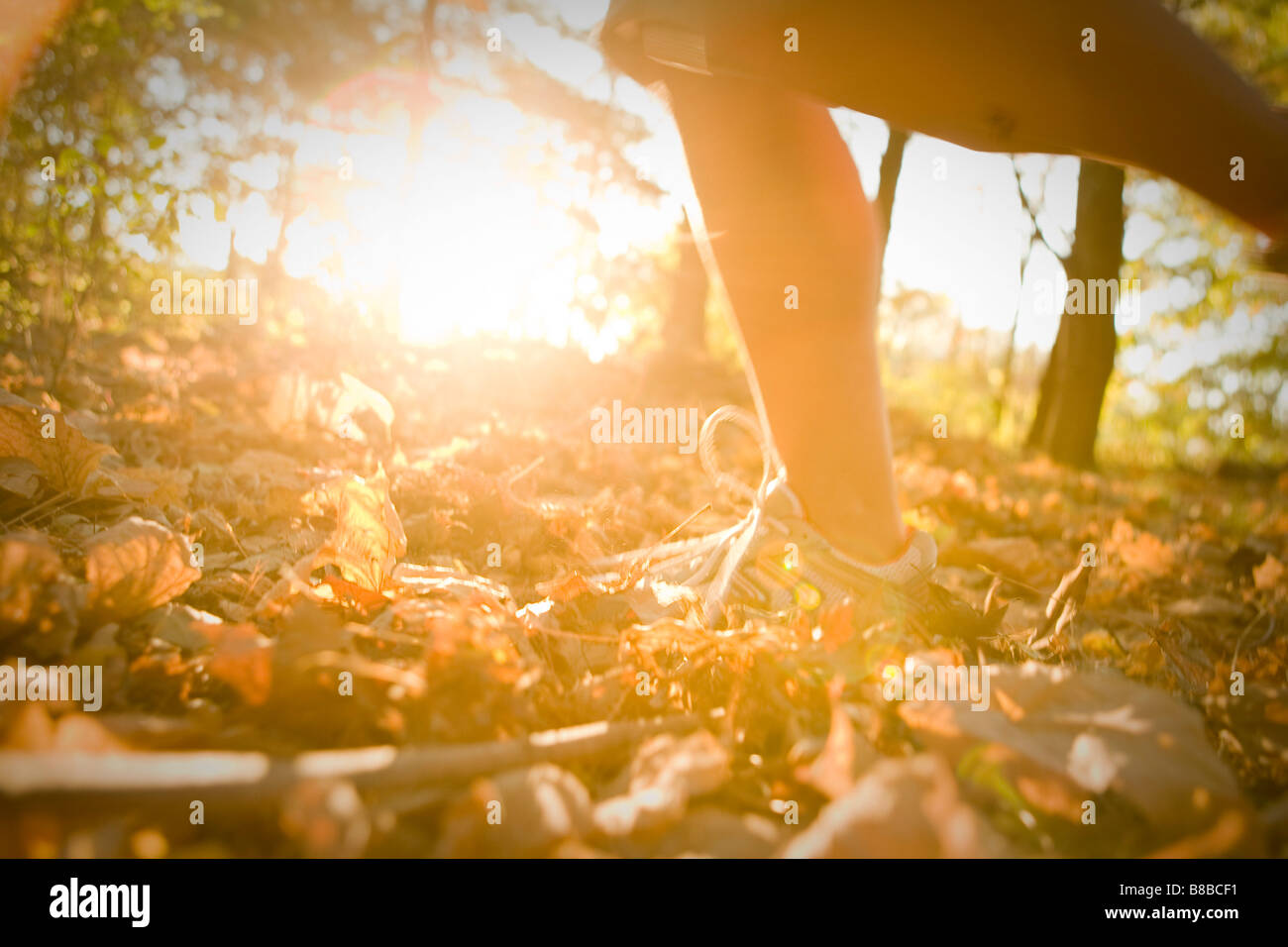 Running in the woods - Stock Image