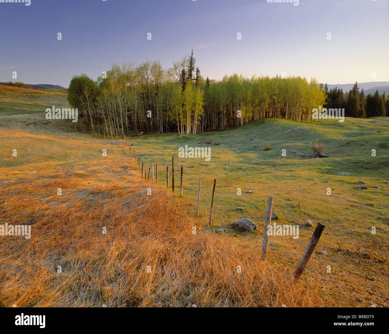 Natural Moments Photography; Pastureland, Spring, near Burns Lake BC - Stock Image