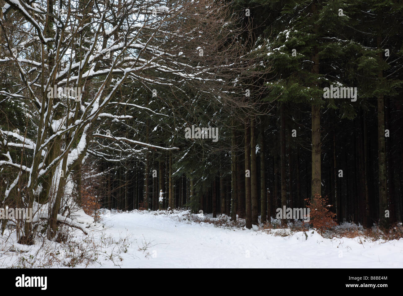 Snow at Heavens Gate, Longleat, Wiltshire, England - Stock Image