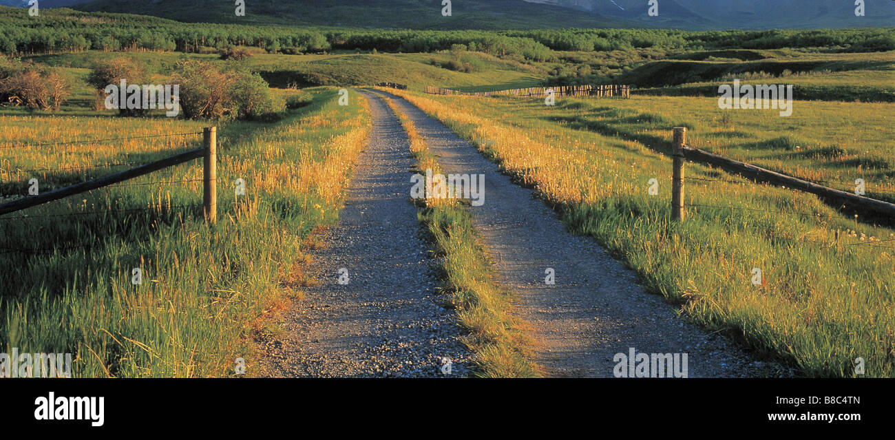 FL5523, Darwin Wiggett; Dirt Road Through Pastureland, Twin Butte, Alberta - Stock Image