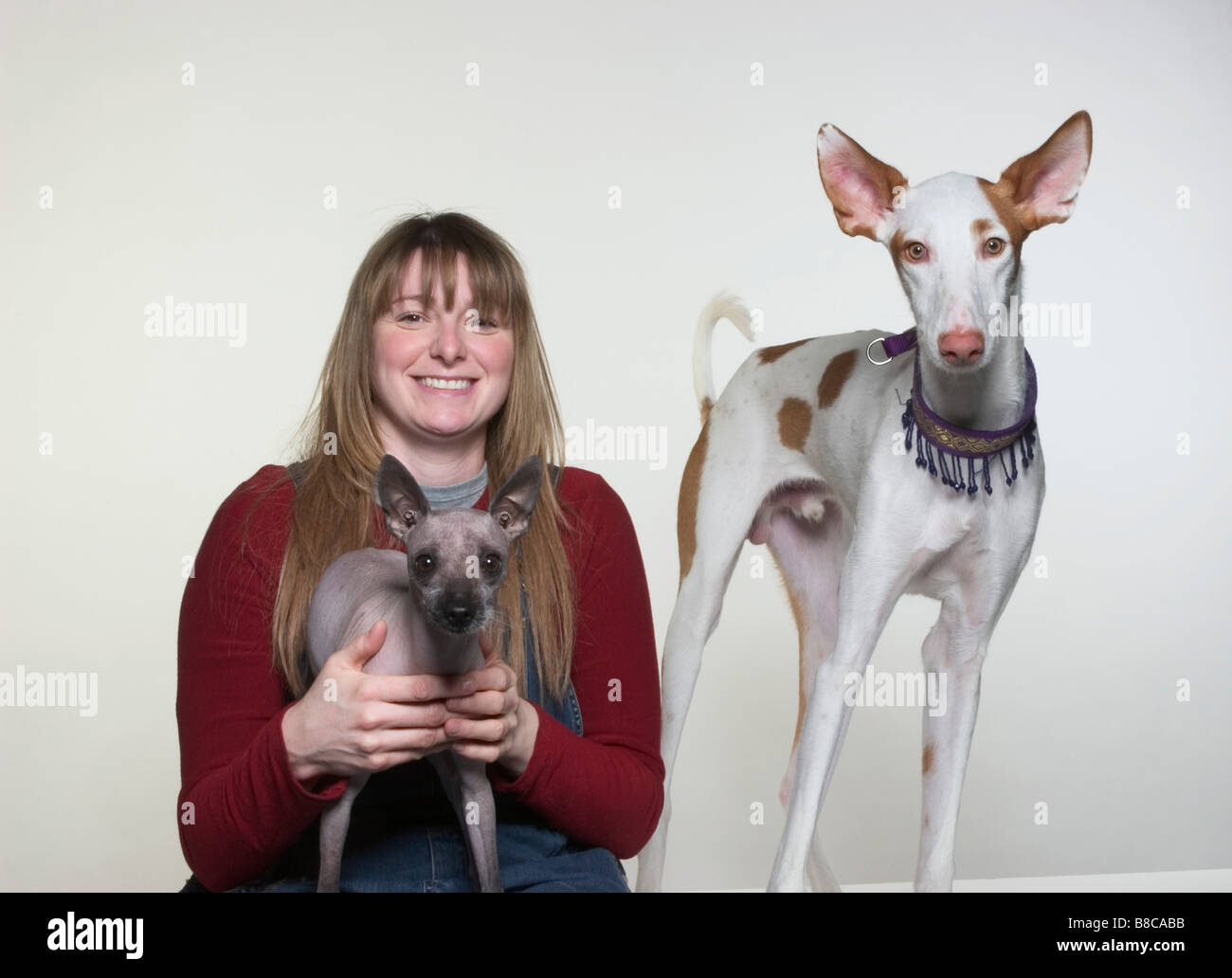 Portrait  Mexican Hairless  Ibizan Hound Owner - Stock Image