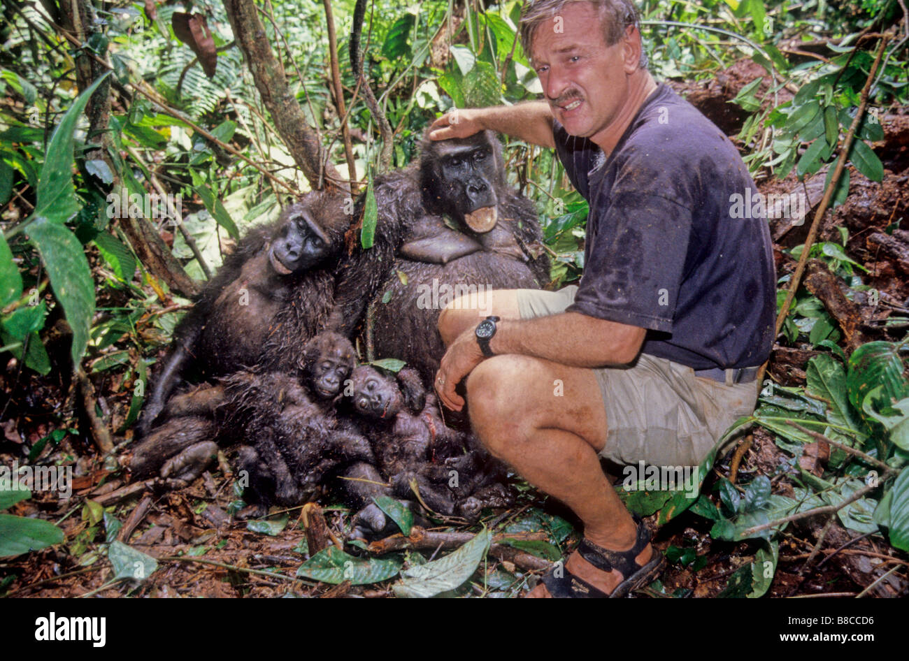 Poached Western Lowland Gorillas - Stock Image