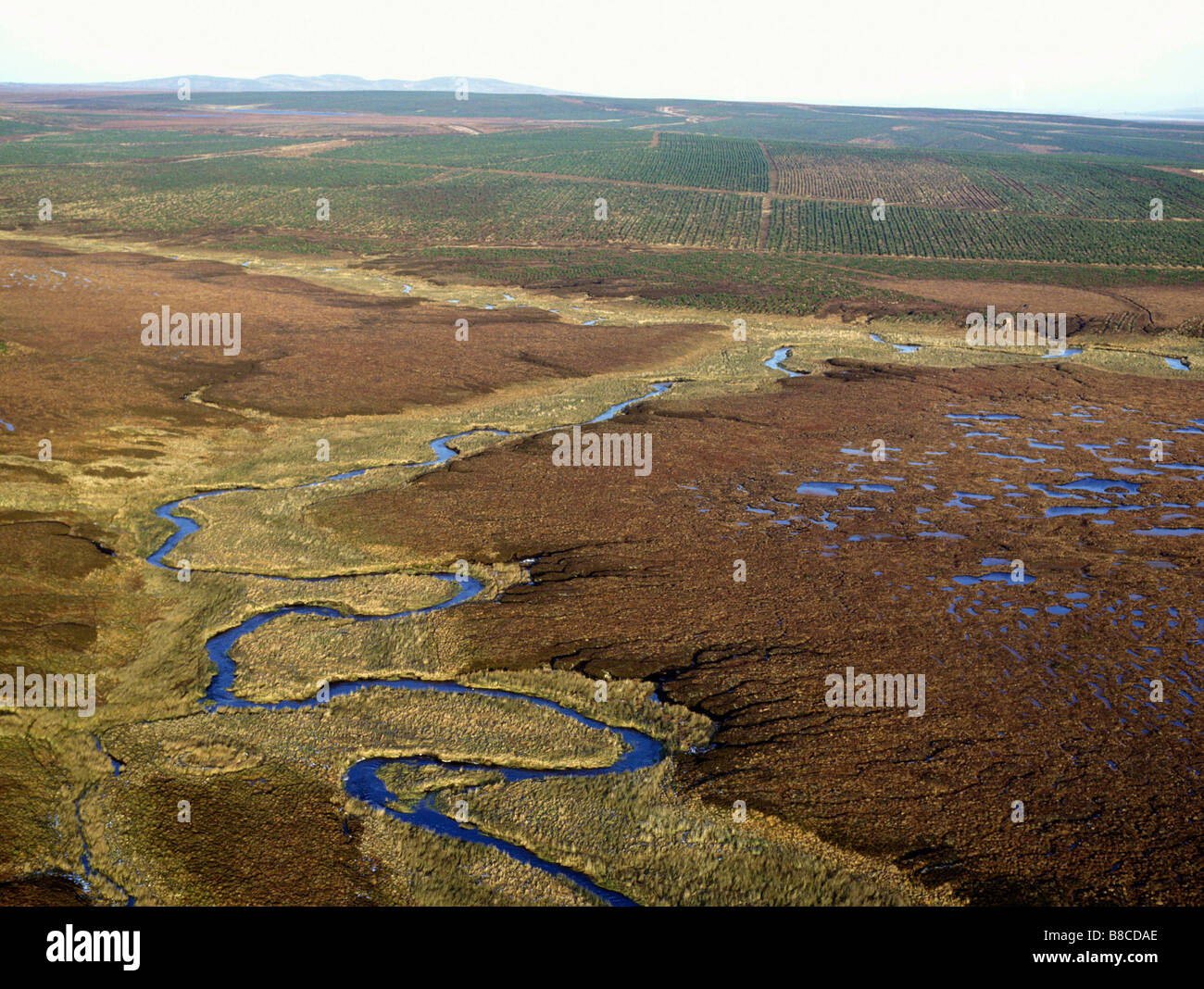 Peatland Threatened by Blanket Conifer Planting - Stock Image