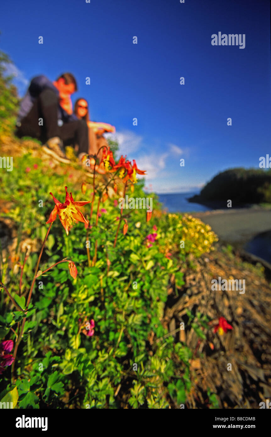 Mountain Columbine, Seduction Point, Haines, Alaska - Stock Image
