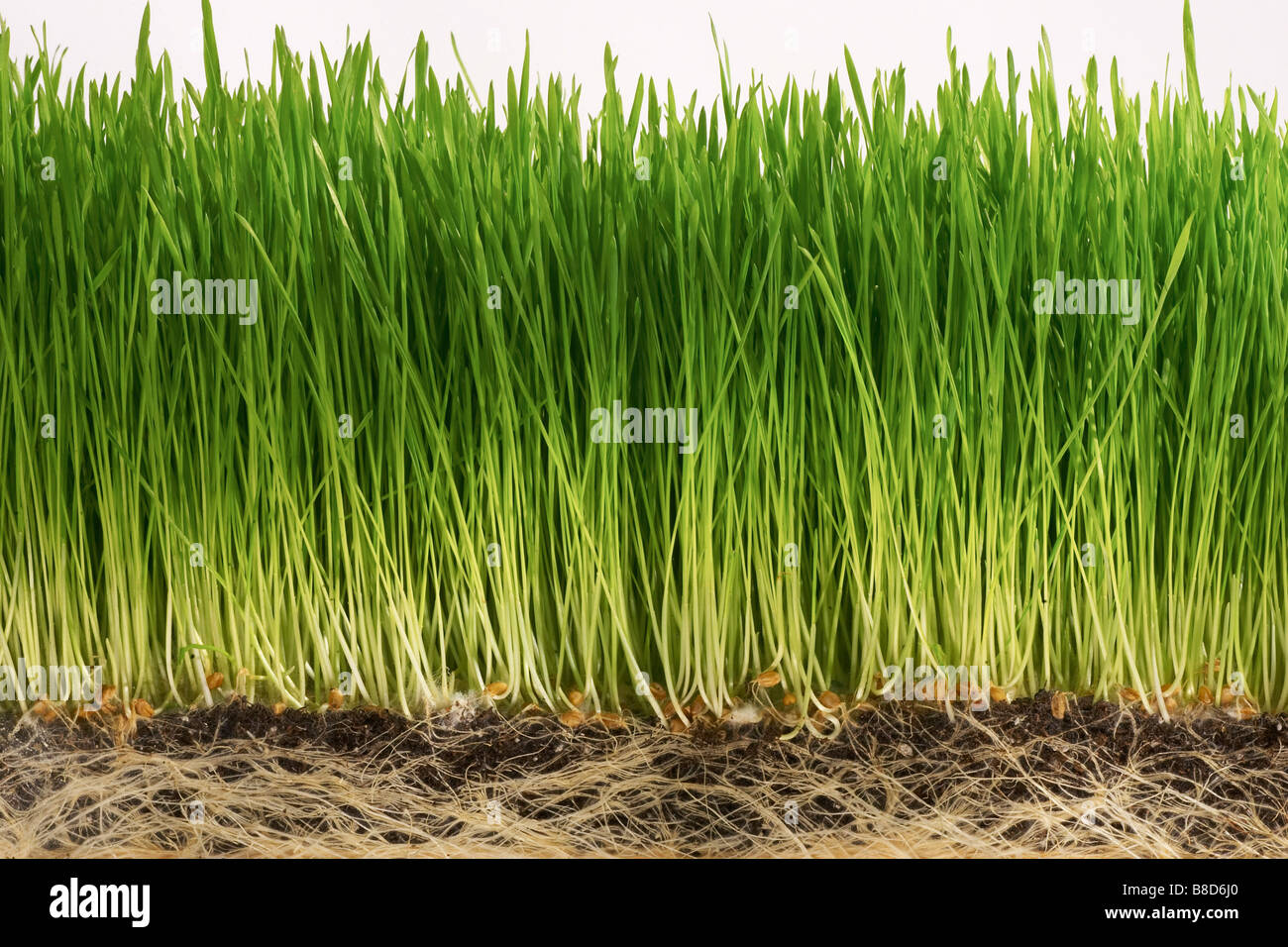Grass  Roots - Stock Image