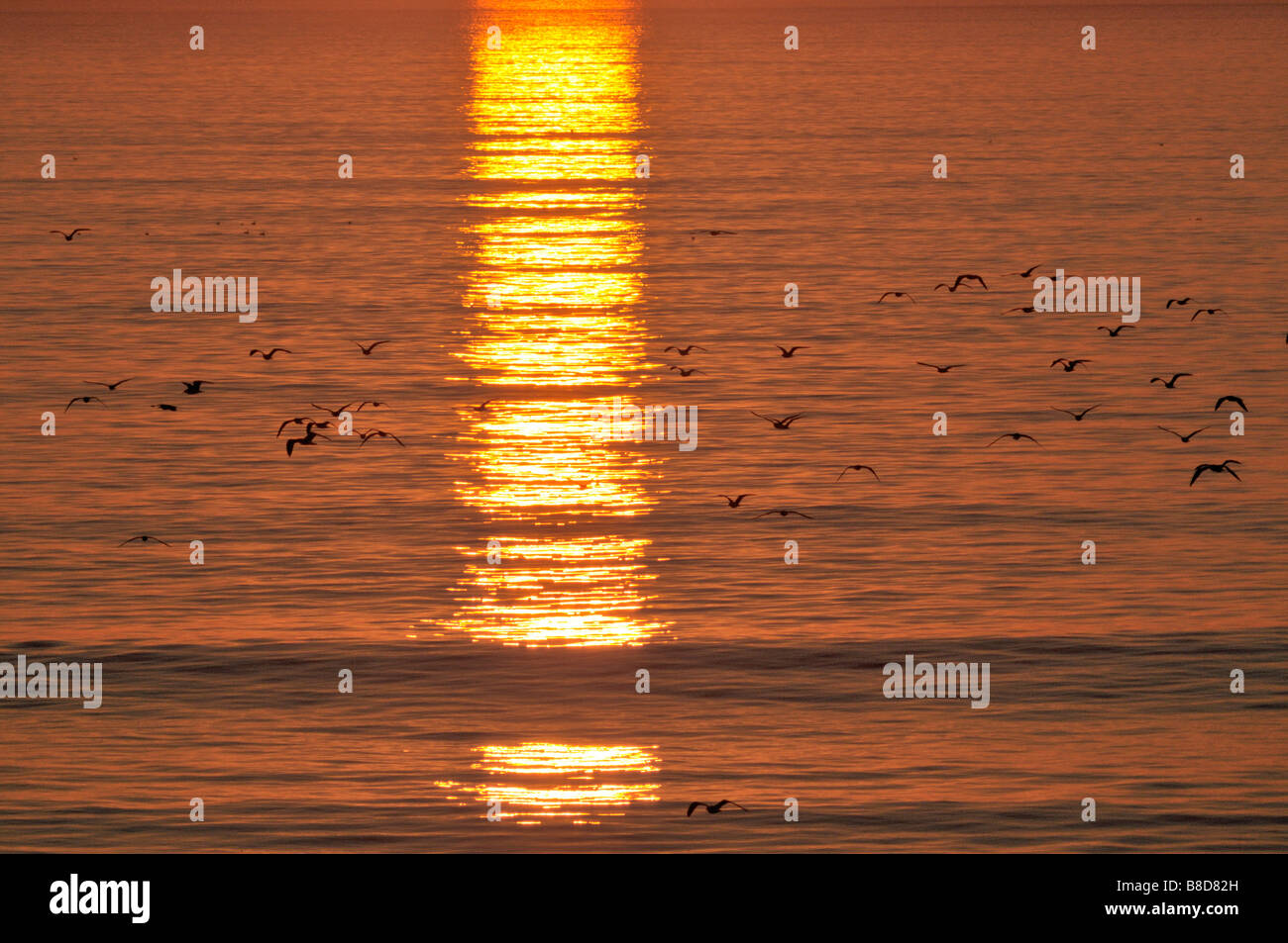 Reflections of the setting sun on the smooth surface of the Pacific Ocean in the Santa Monica Bay - Stock Image