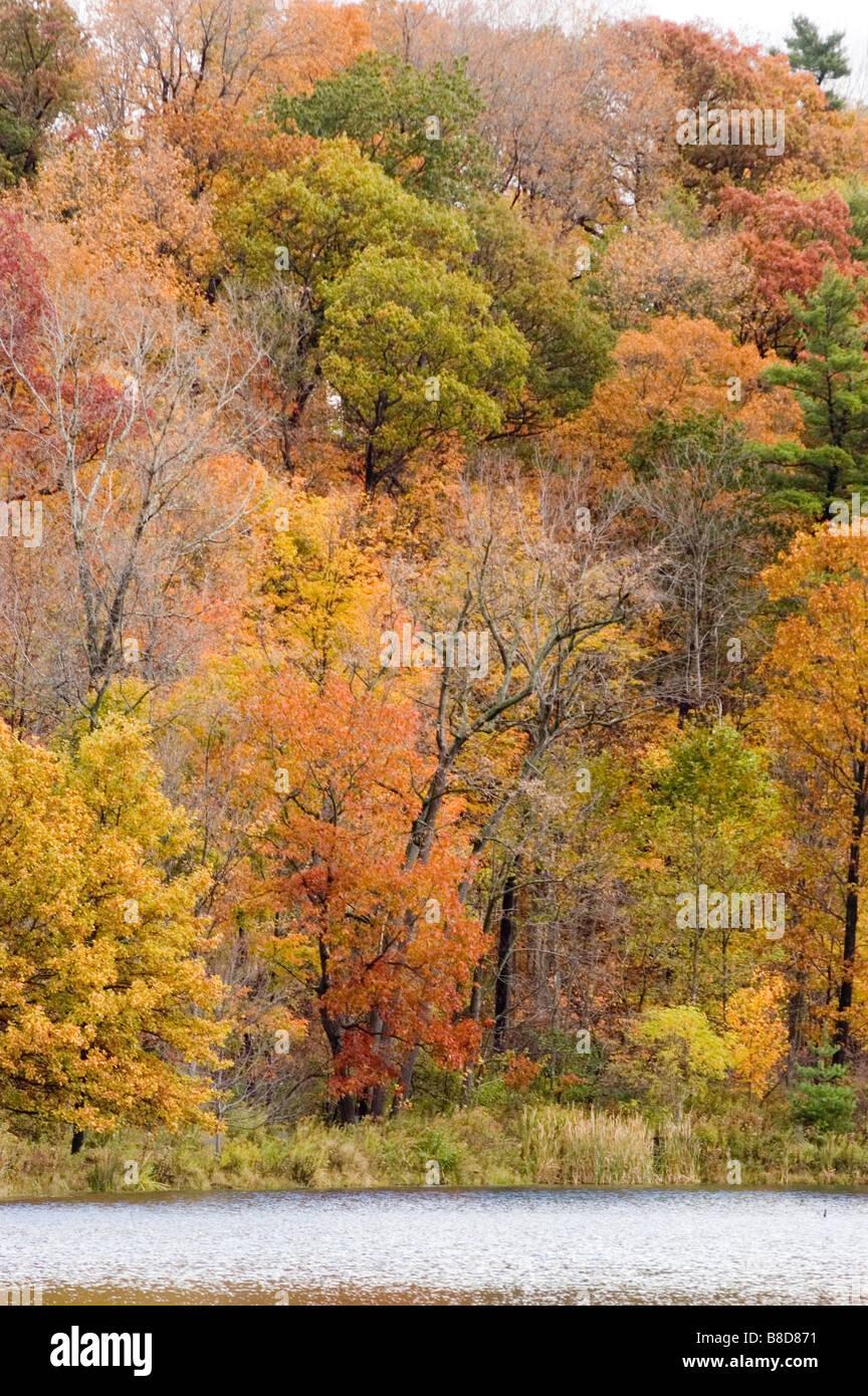 Autumn trees foliage, Ithaca, NY, USA - Stock Image