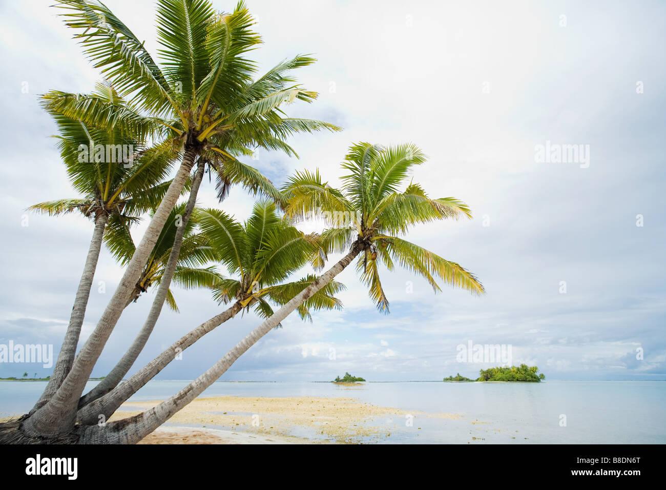 Fakarava island - Stock Image