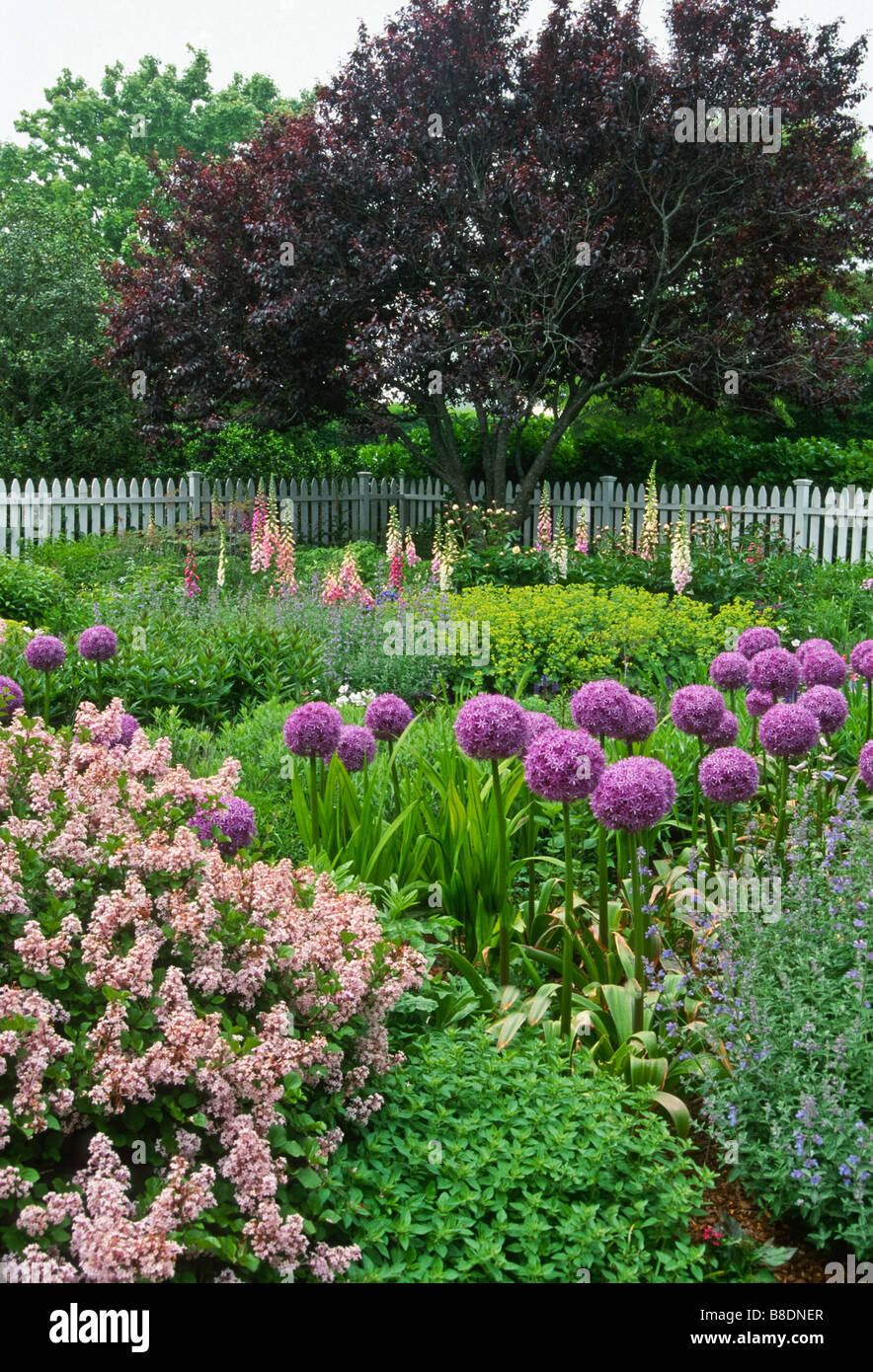 A flower garden designed with a pink, blue, purple color scheme brims with flowers of contrasting shapes and textures Stock Photo