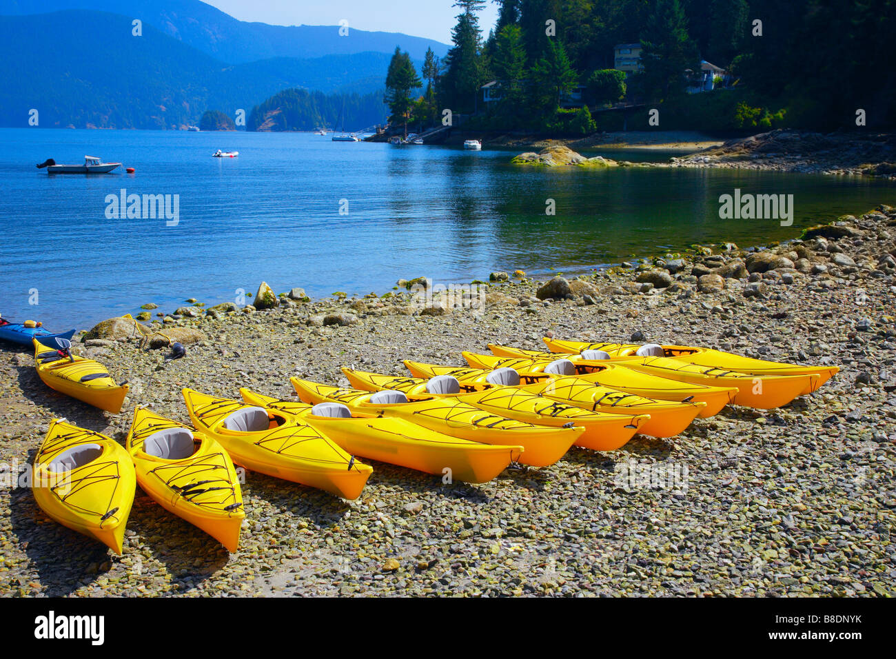 Row of yellow canoes on the beach - Stock Image
