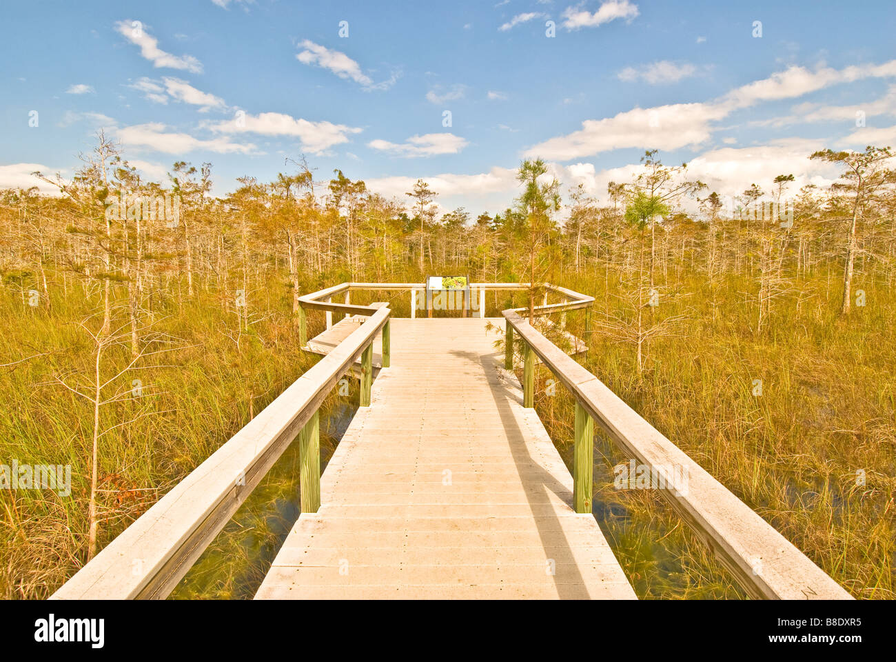 Rock Reef Pass boardwalk Everglades National  Park composite decking in cypress trees has bright white glare from - Stock Image