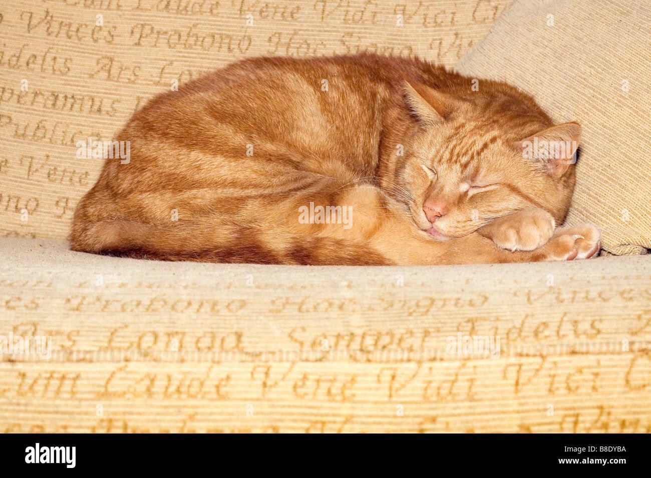 Cat asleep on sofa - Stock Image