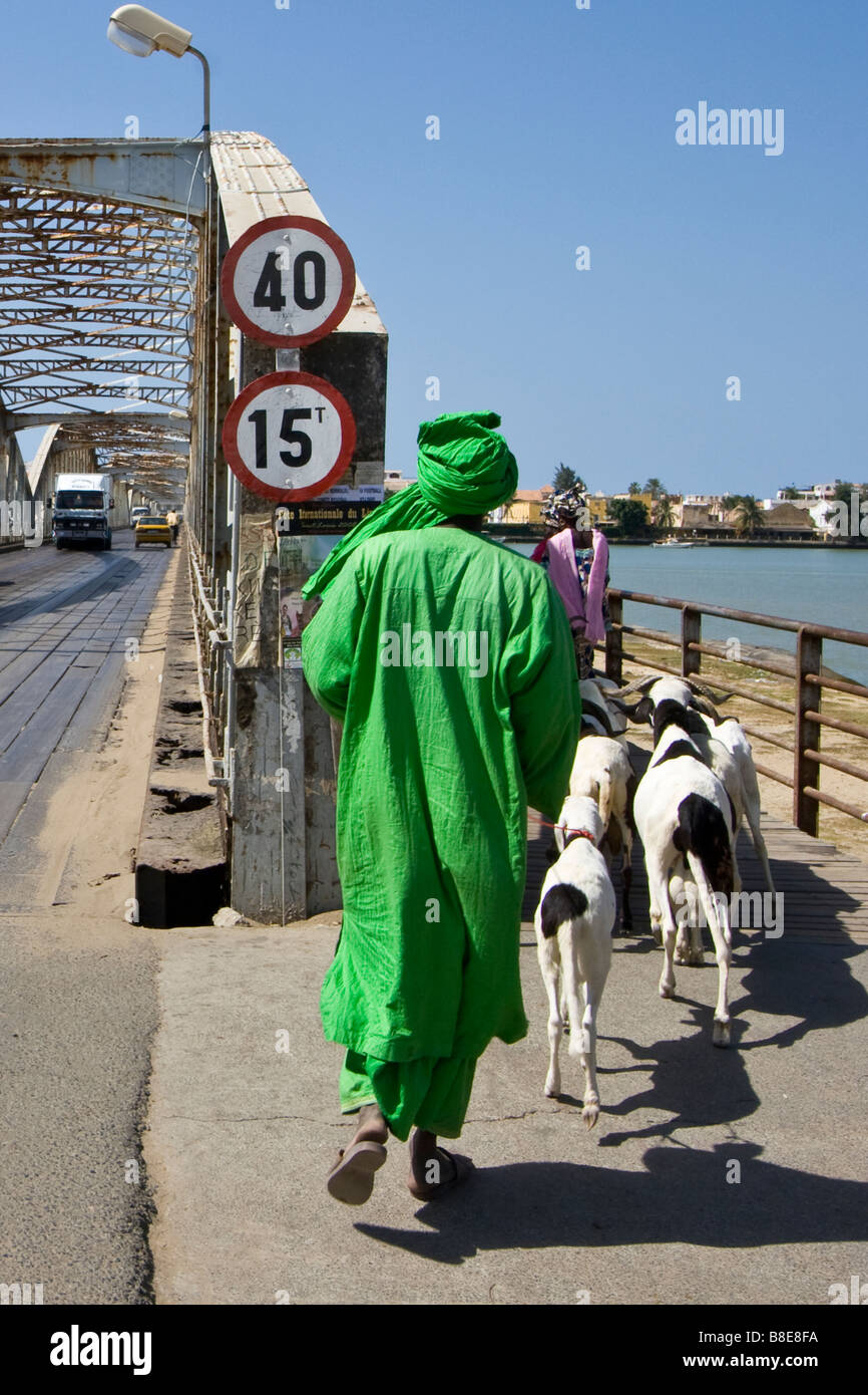 Herding Goats onto Faidherbe Bridge in St Louis in Senegal Africa - Stock Image