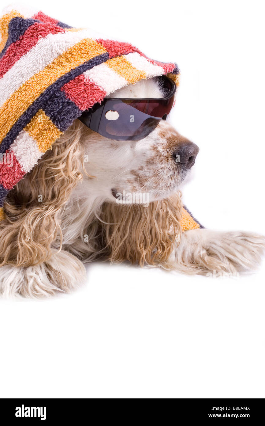Cute Dog On A White Background Dressed Up With Clothes Stock Photo