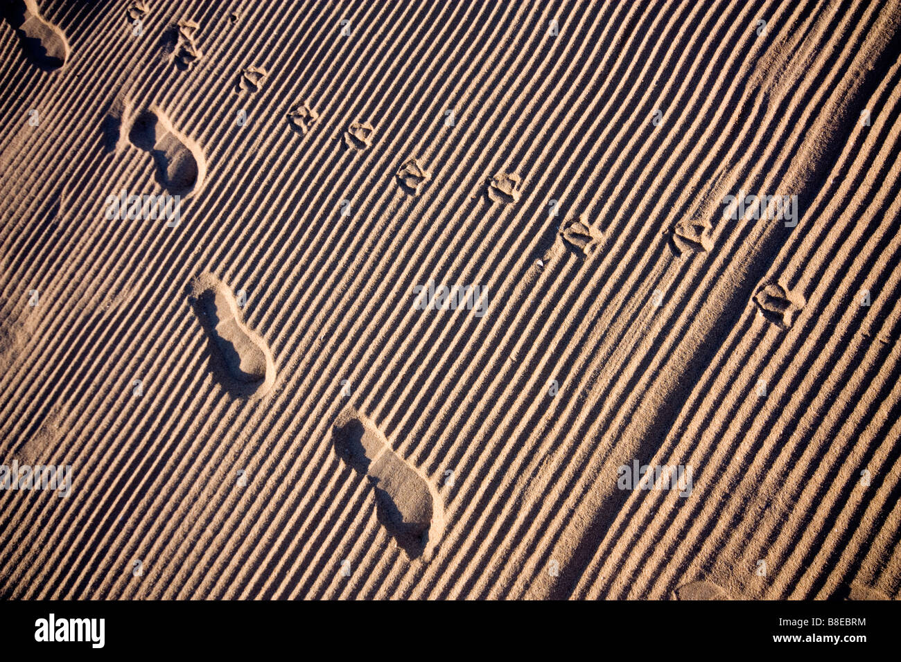 Footprints on the sand in Albena in Bulgaria - Stock Image