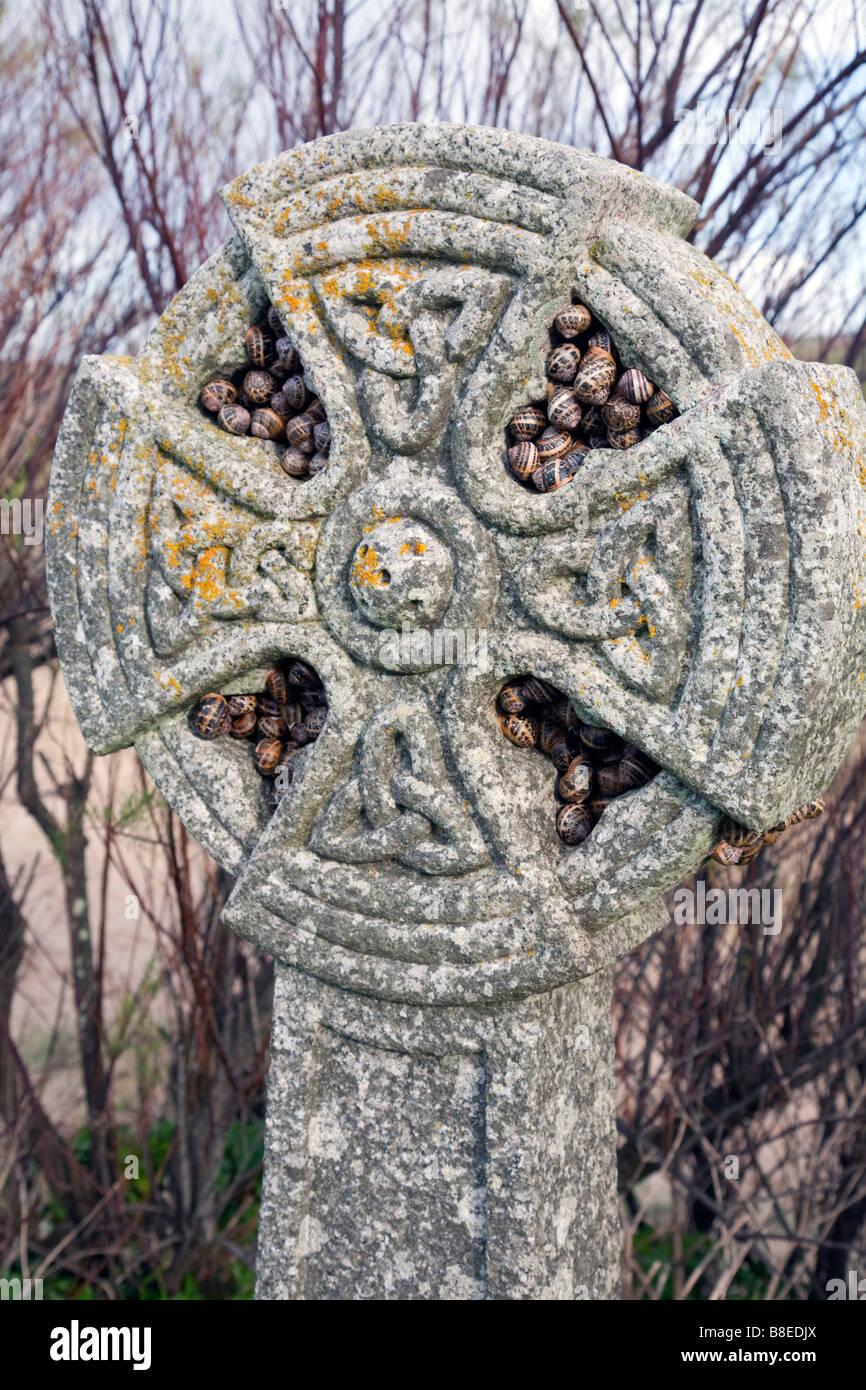 snails hibernating on a celtic cross cornwall - Stock Image