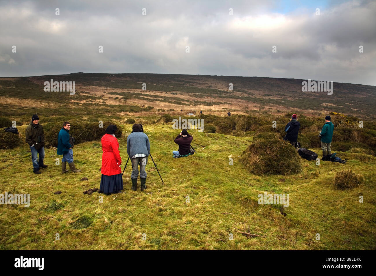 bird watchers twitchers looking at a snowy owl cornwall - Stock Image