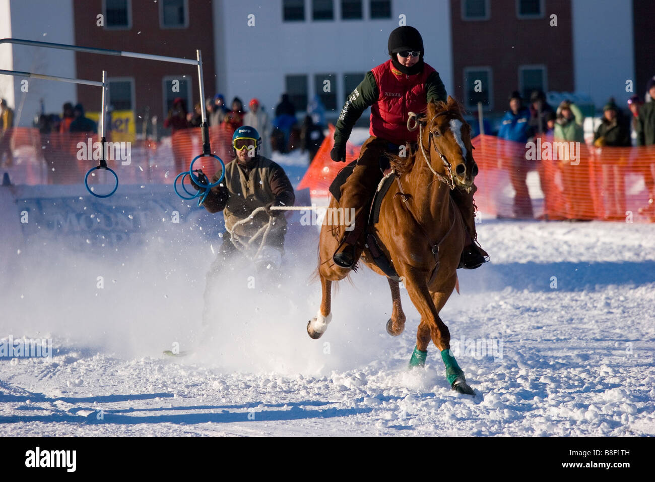 A rider on horseback pulls a skier in a winter event known as skijoring, New Hampshire, USA - Stock Image