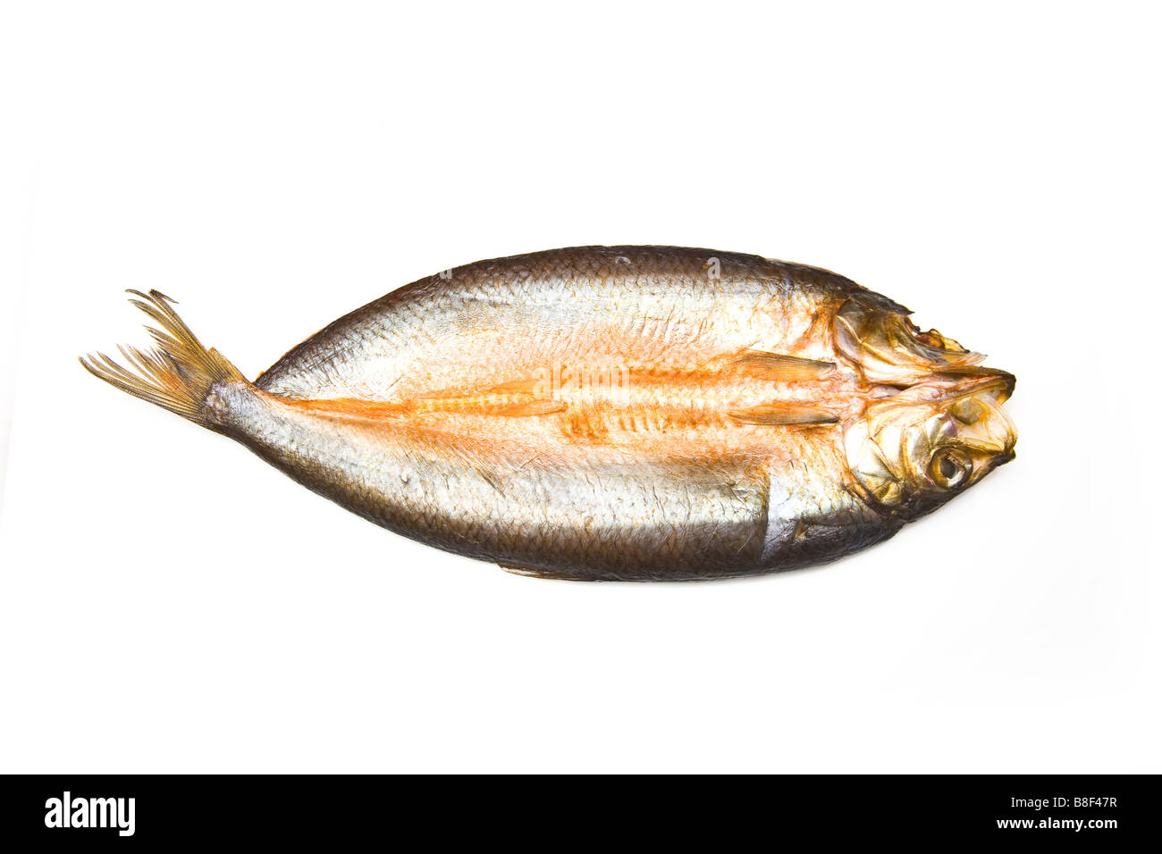 Traditional smoked kipper isolated on a white studio background - Stock Image