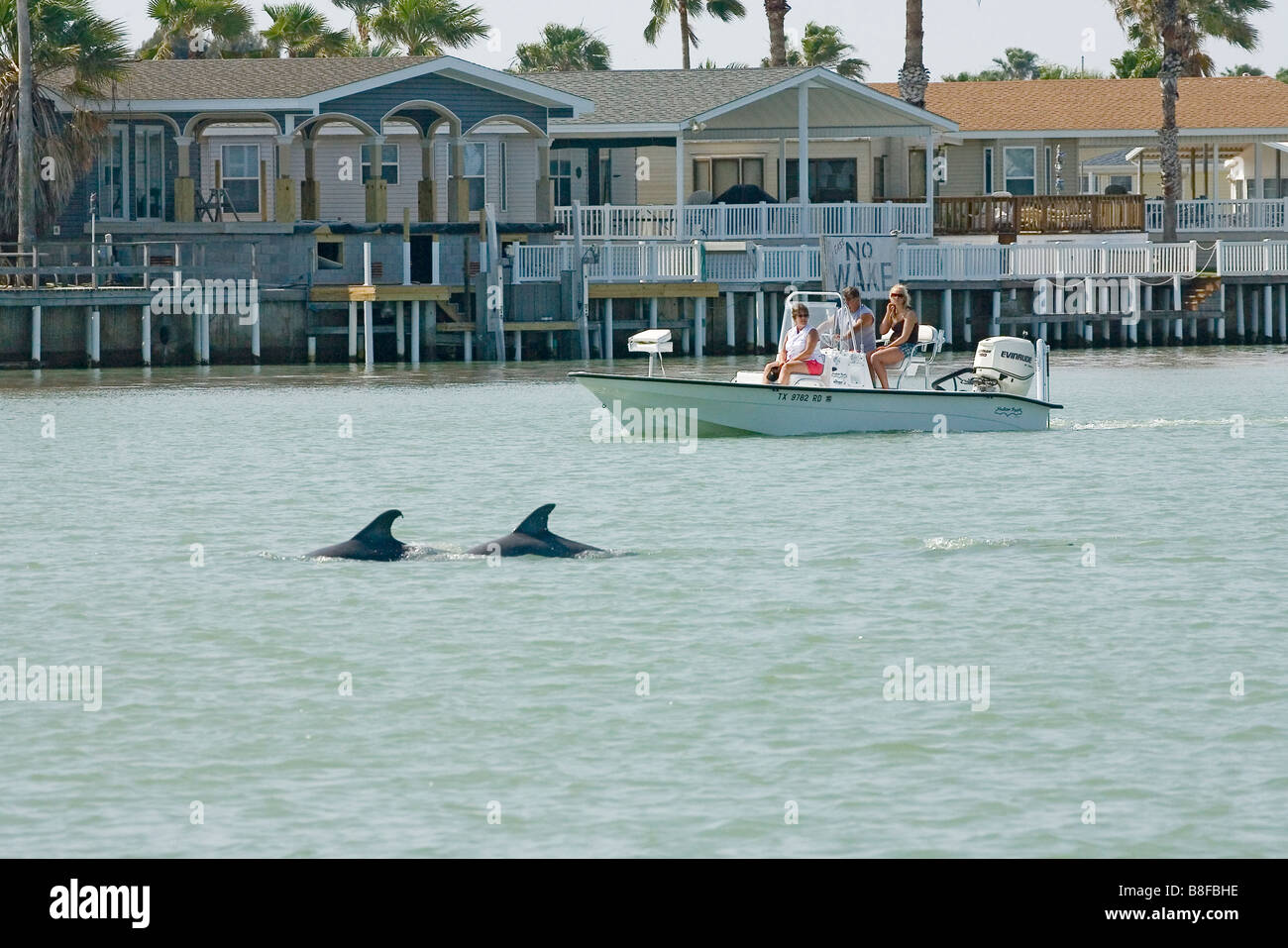 People watching Bottlenosed Dolphins from their boat. - Stock Image