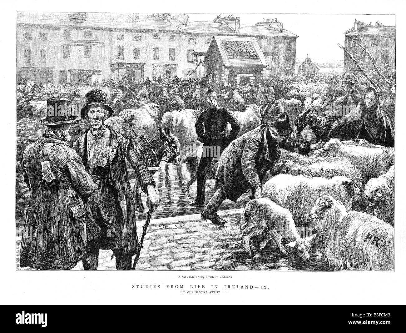 Galway Cattle Fair 1888 engraving of life in Ireland with a country livestock market Stock Photo