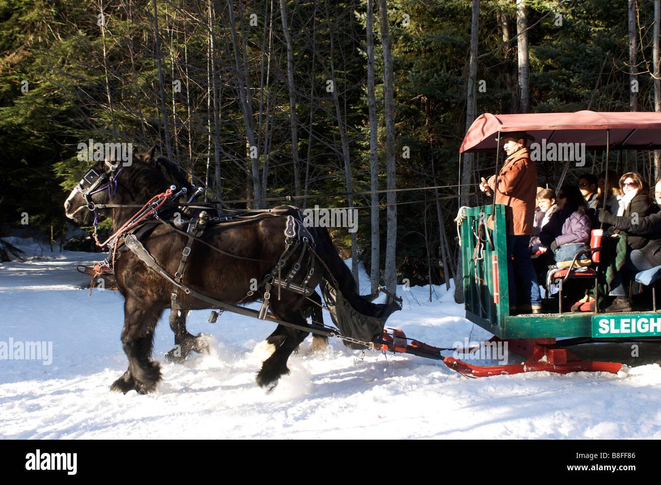 Horse drawn sleigh ride tour around Green Lake Whistler BC Canada - Stock Image