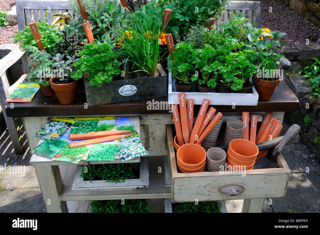 Herb plants - Stock Image
