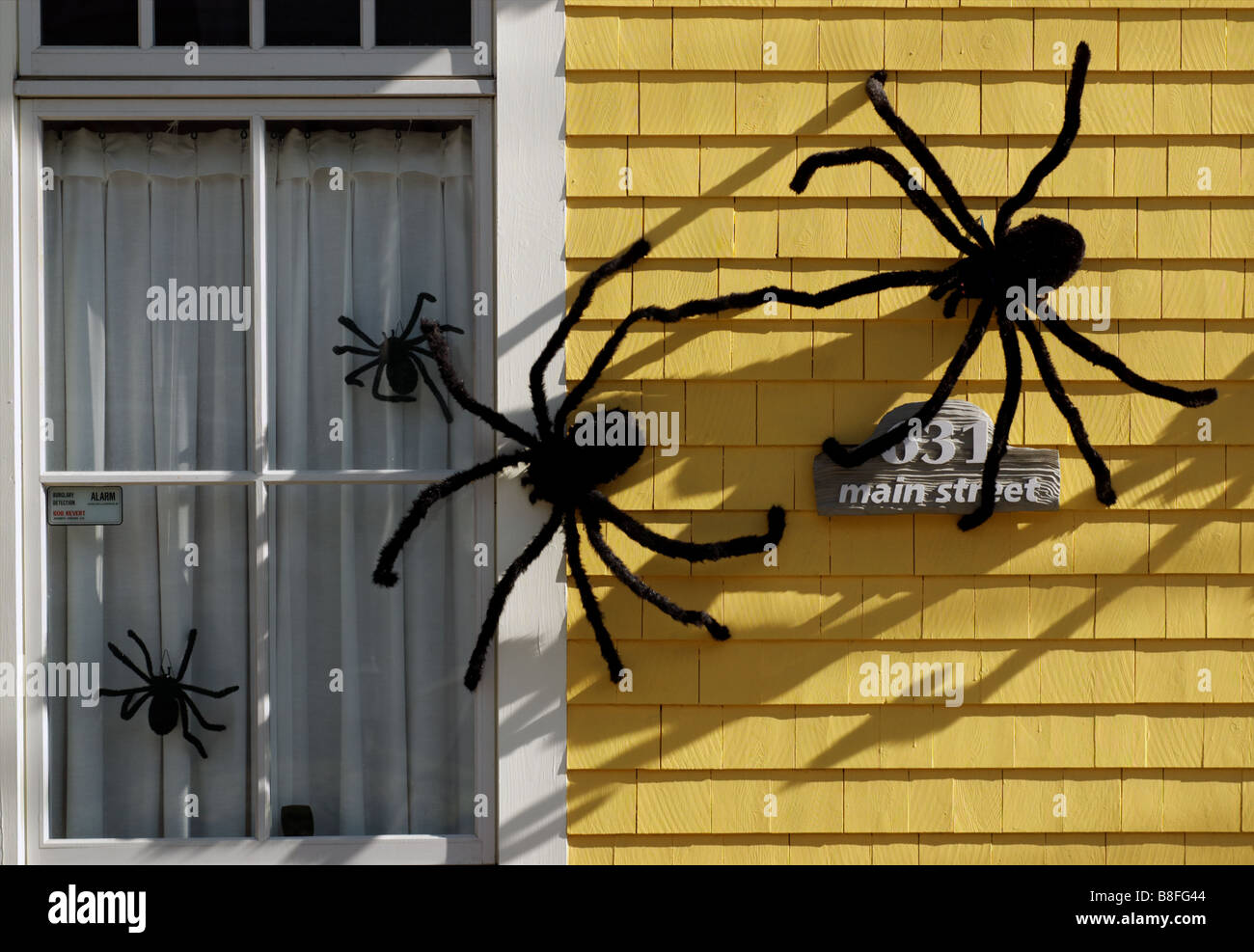 Big furry spiders in a house window as halloween decoration