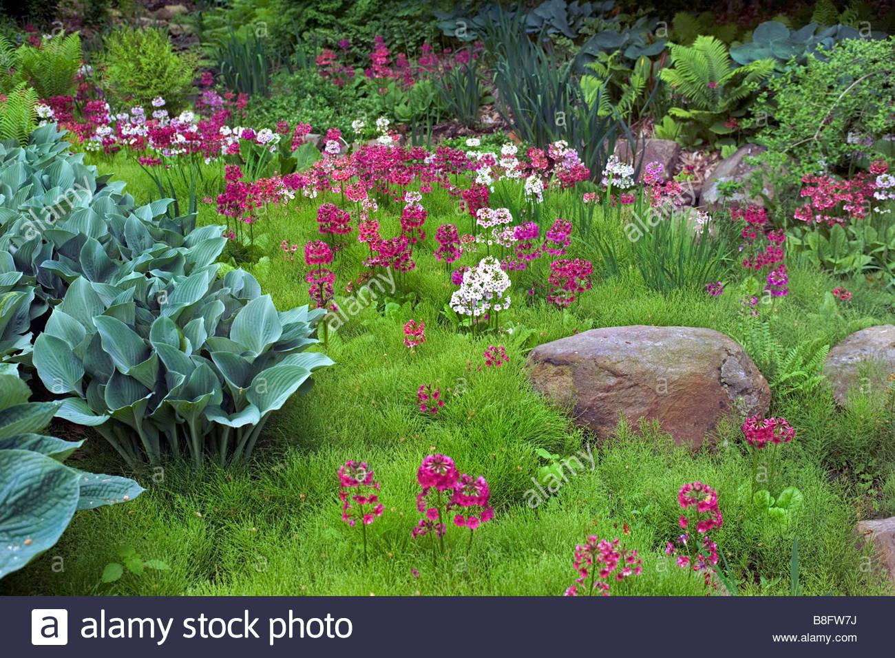 bog garden in spring planted with candleabra primula equisetum hosta ferns chanticleer garden pennsylvania usa - Bog Garden