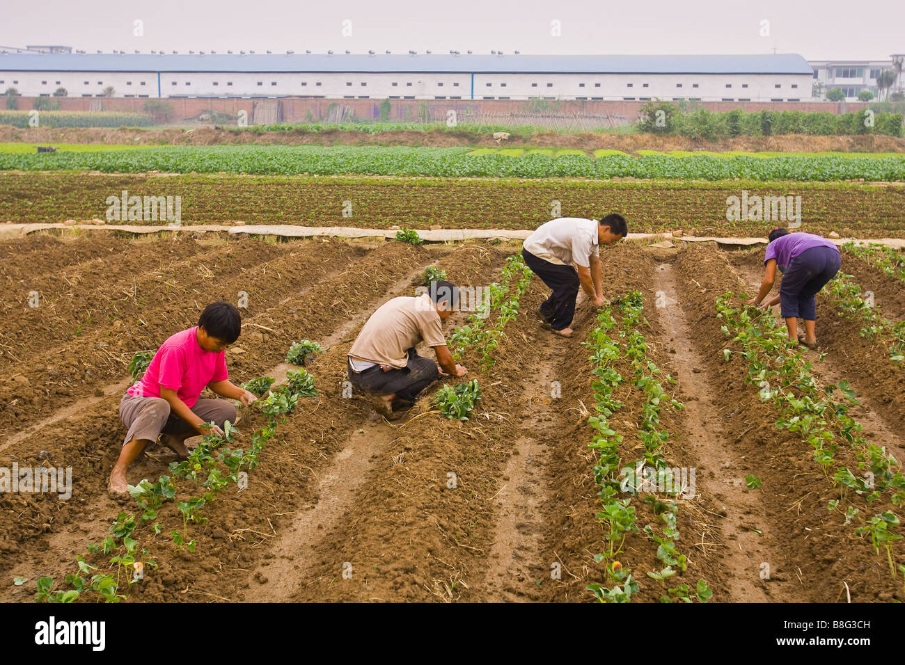 PAN YU, GUANGDONG PROVINCE, CHINA - Four agricultural