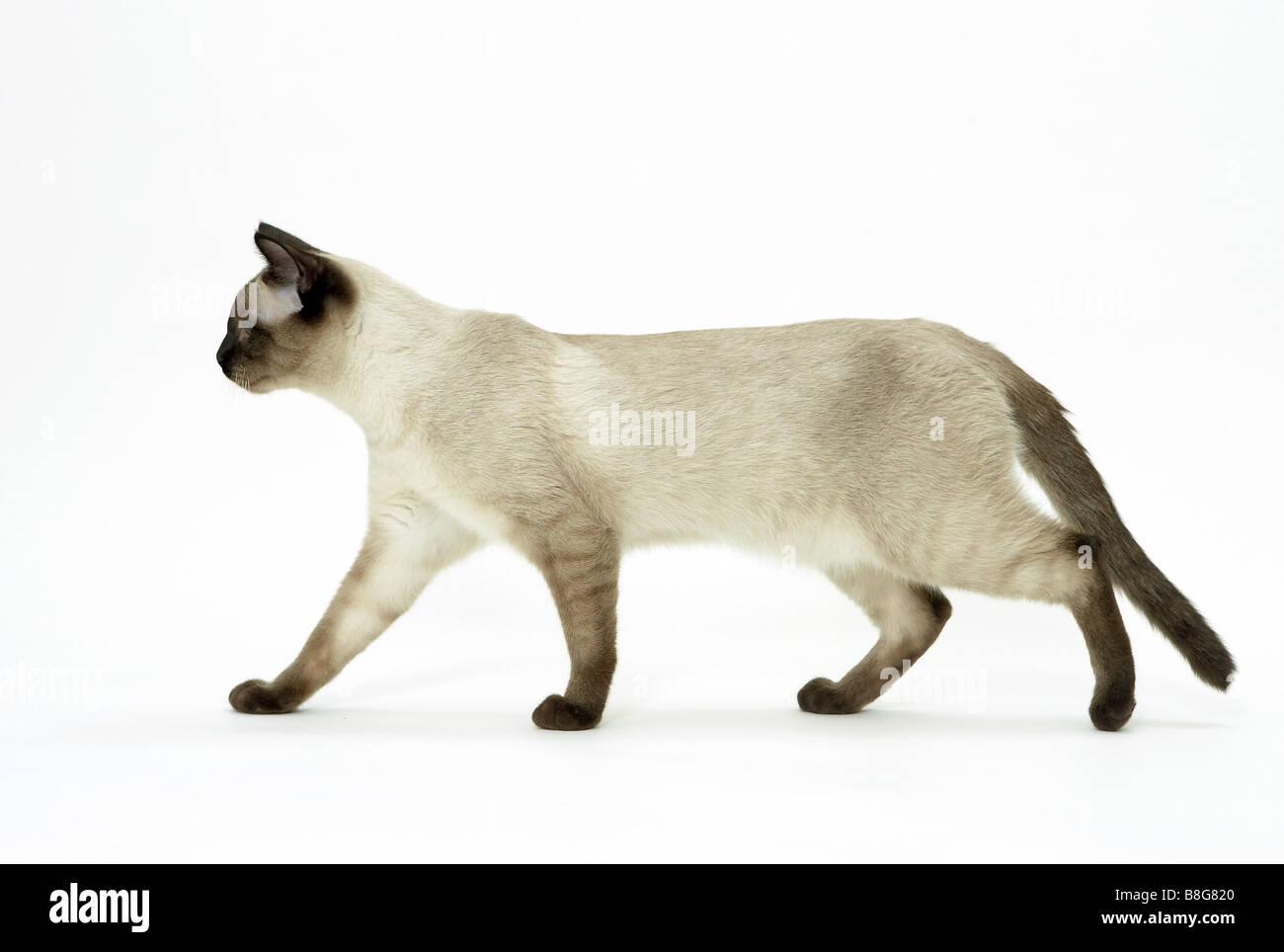 average joe cat show