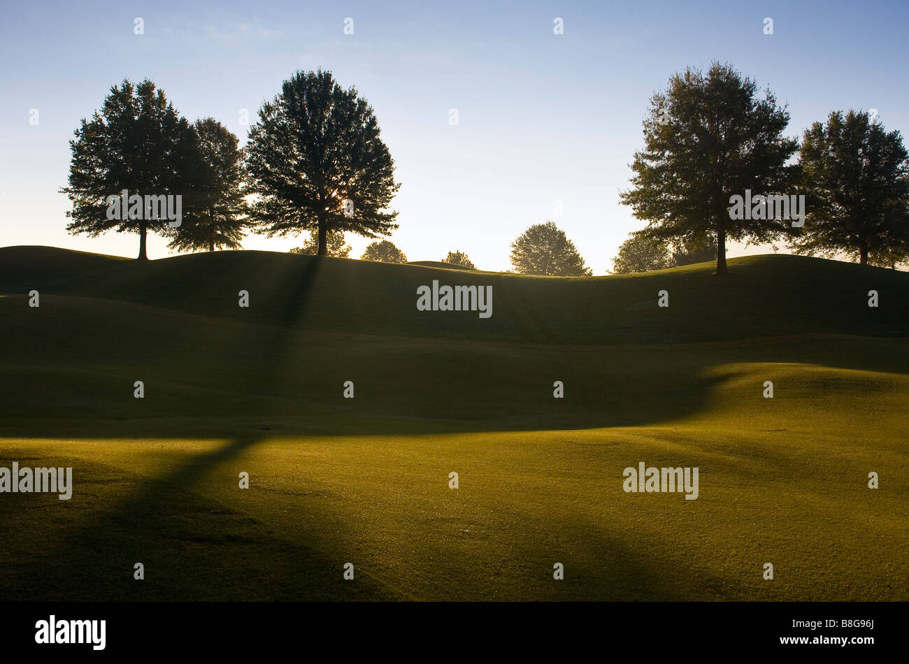 Sunrise Tree Silhouette in Franklin Tennessee USA - Stock Image