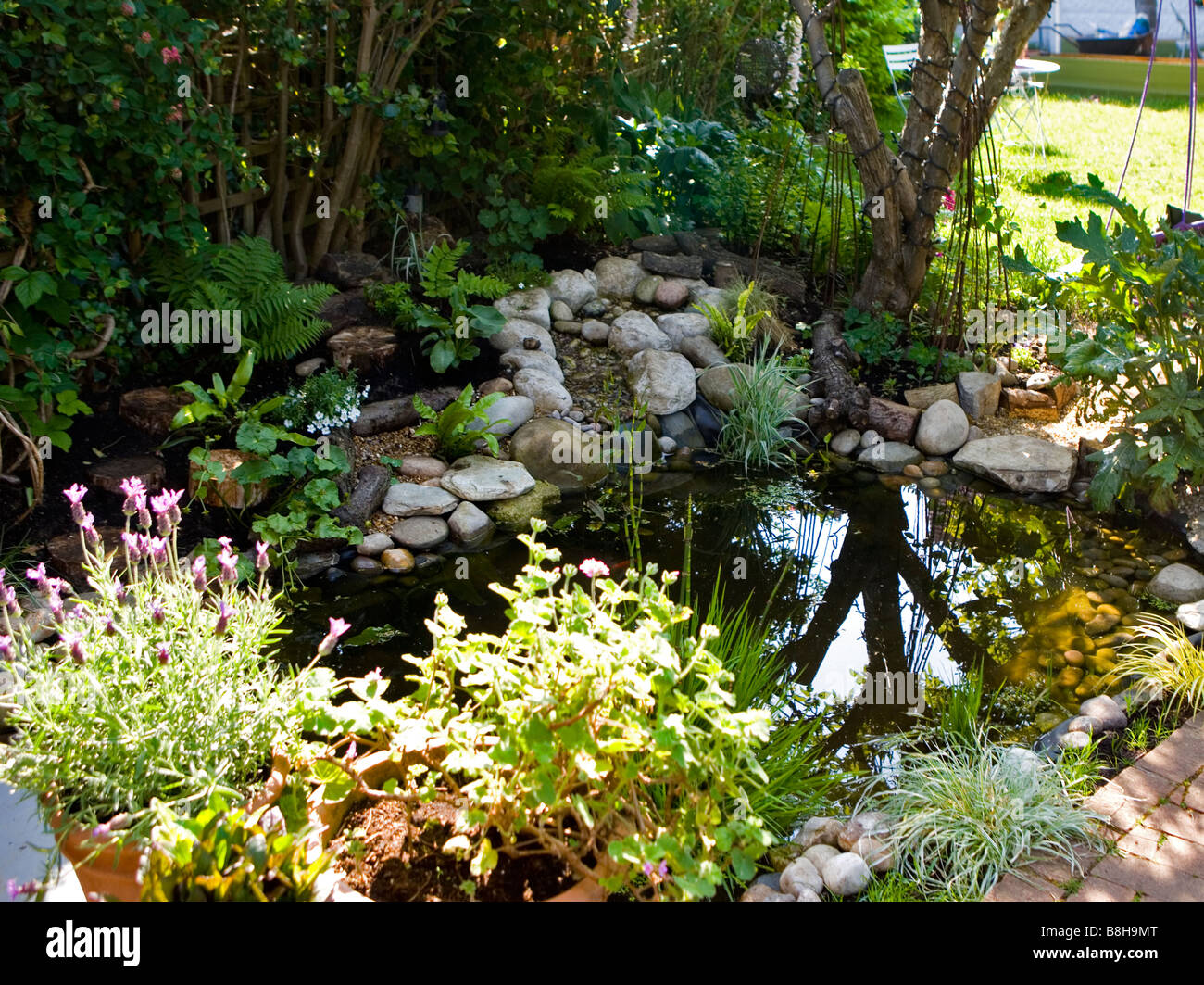 Wildlife garden pond - Stock Image