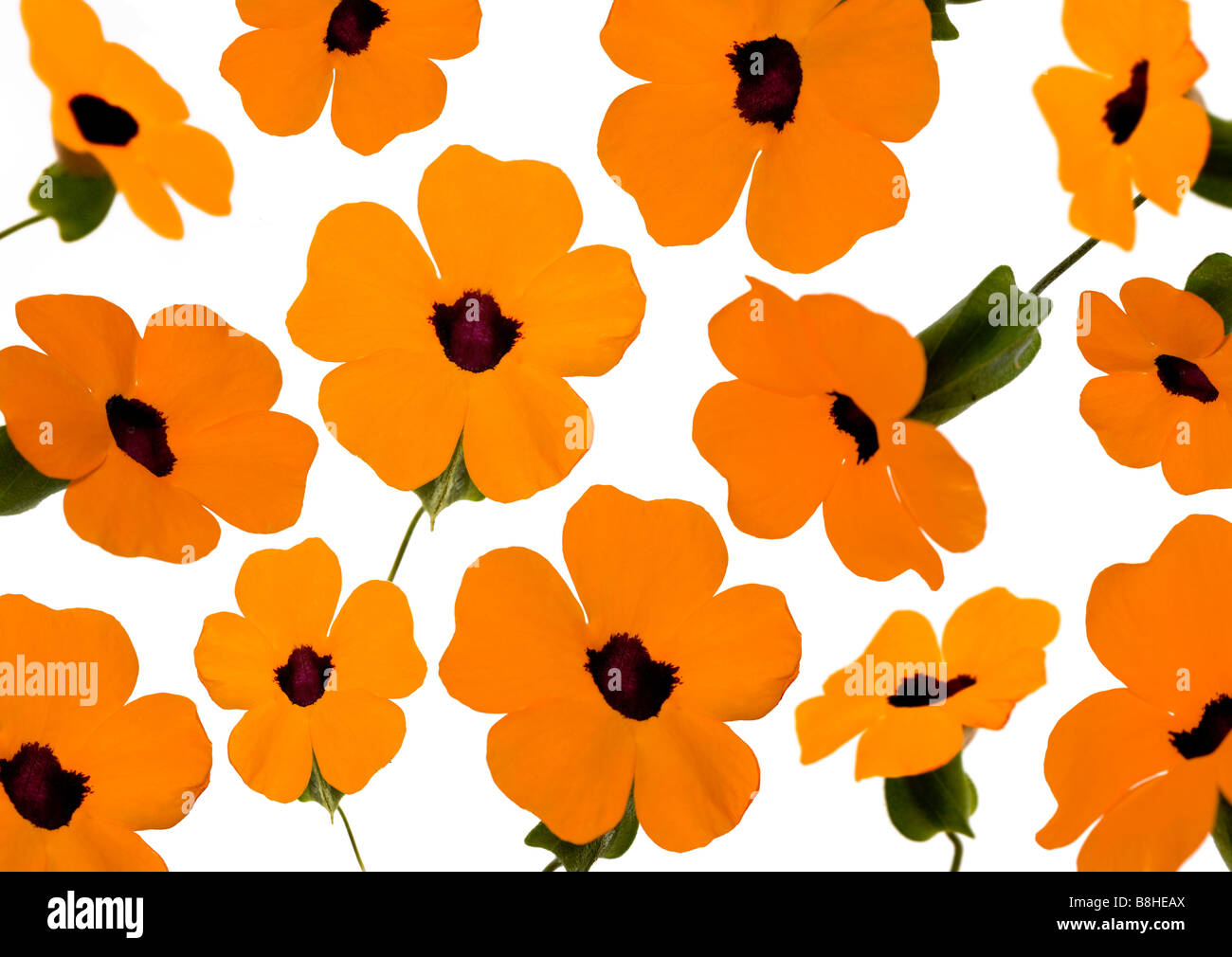Photomontage of orange flowers - Stock Image