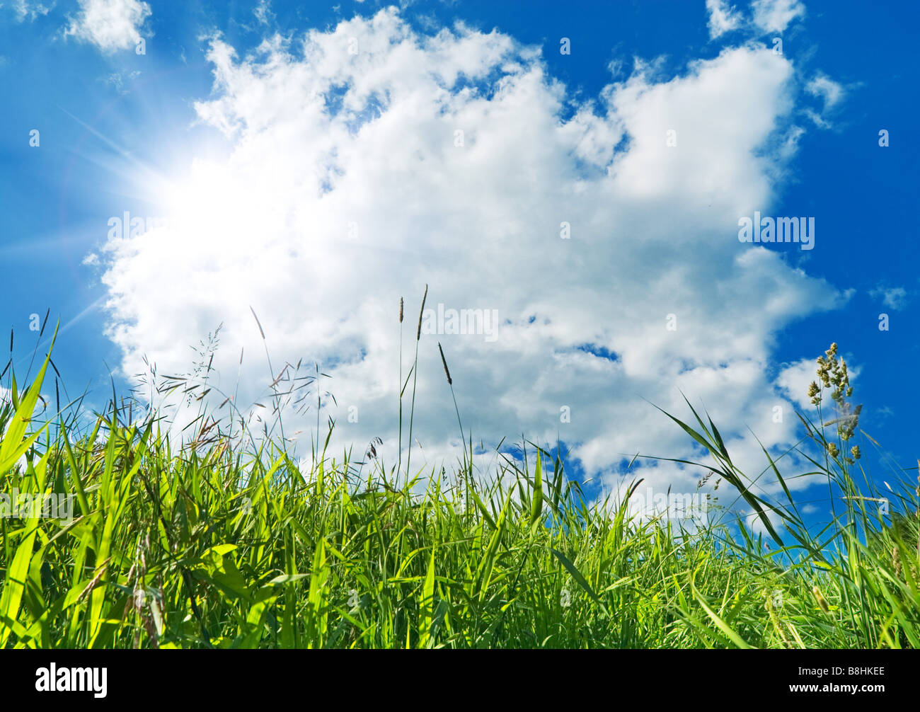 green grass and blue sky background - Stock Image