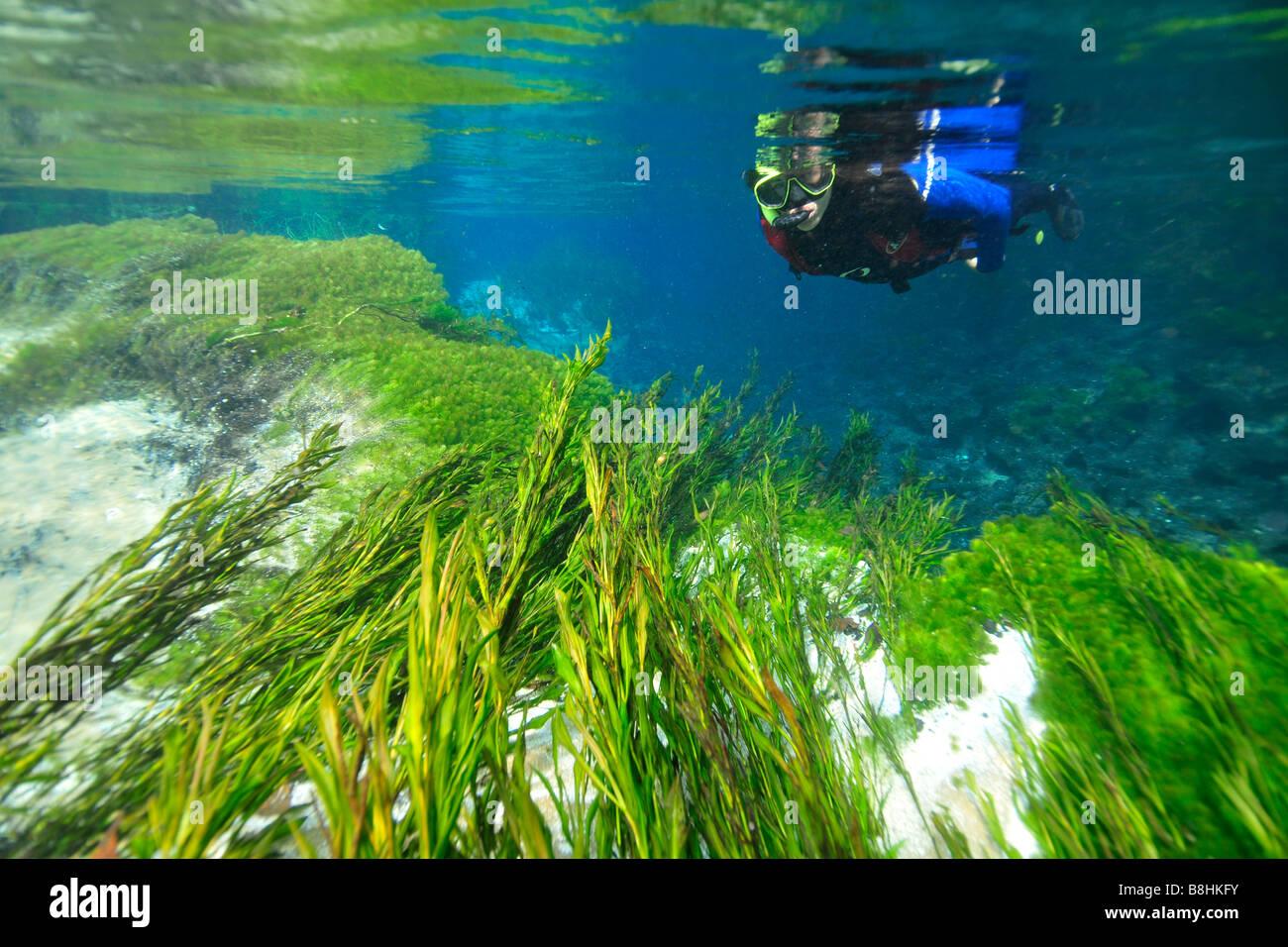 Diver and underwater vegetation at Sucuri river Bonito Mato Grosso do Sul Brazil - Stock Image