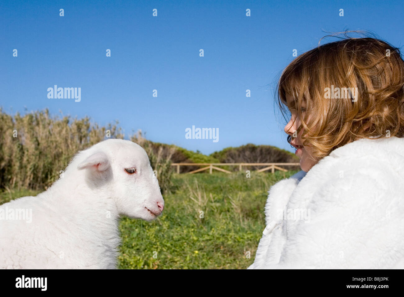 young girl playing with a sheep Stock Photo